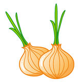 Onions isolated illustration Stock Photos