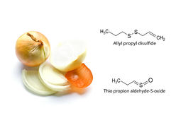 Onions. Lacrimators onions. Chemical formula. Royalty Free Stock Photo