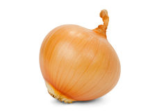 Onions. Large brown onion isolated on white background Royalty Free Stock Photography