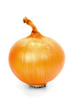 Onions. Large brown onion isolated on white background Royalty Free Stock Photos
