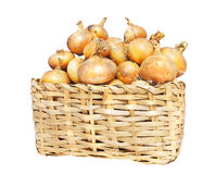 Onions lie in a basket Royalty Free Stock Images