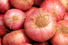 Onions. Many fresh organic red onions Royalty Free Stock Images