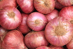 Onions. Stock Images