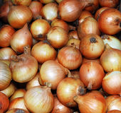 Onions in the market. Background of onions for sale in a market Stock Photography
