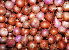 Onions in the market. Background of onions for sale in a market Stock Image