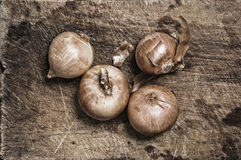 Onions on old wooden table. Royalty Free Stock Photo