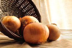 Onions out of a basket on a table cloth tablecloth Royalty Free Stock Photos