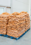 Onions on pallets Stock Photo