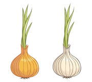 Onions with and without peel Stock Image