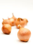 Onions pile Royalty Free Stock Images