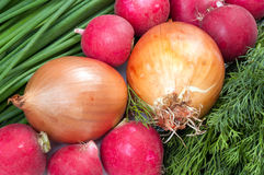 Onions radish and fennel Stock Images