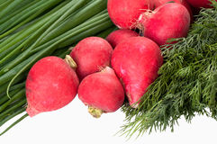Onions radish and fennel on white Stock Photography