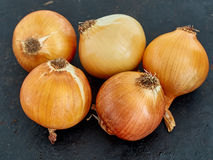 Onions. Raw onion on the black background Royalty Free Stock Images