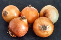 Onions. Raw onion on the black background Stock Image