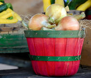 Onions in red bushel basket Royalty Free Stock Image