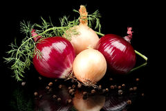 Onions,red onions,dill,pepper and allspice isolated on black Royalty Free Stock Images