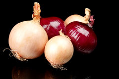 Onions and red onions isolated on black Royalty Free Stock Image