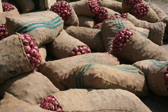 Onions. Sacks of red onions in Swat valley, Pakistan Stock Image