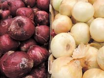 Onions for sale at a Farmers Market.  Stock Photo