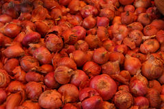 Onions for sale Stock Photography