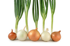 Onions and scallions Royalty Free Stock Photo
