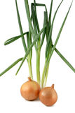 Onions and scallions Stock Images