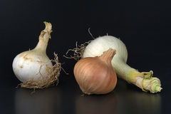 Onions. Some biological onions on a black background royalty free stock images