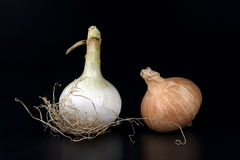 Onions. Some biological onions on a black background royalty free stock photos