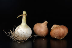 Onions. Some biological onions on a black background royalty free stock image