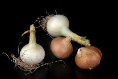 Onions. Some biological onions on a black background stock photos