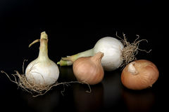 Onions. Some biological onions on a black background royalty free stock photo