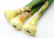 Onions with stem Royalty Free Stock Photos