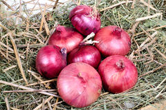 Onions on straw Royalty Free Stock Image