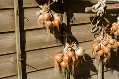 Onions in the sun. Hanging on a brown wooden wall Stock Photo