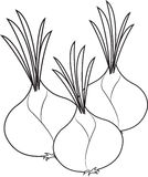 Onions. Three big onions ready to eat Stock Images
