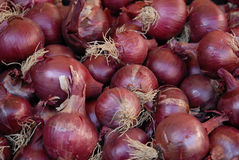 Onions to the market Stock Images