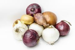 Onions. Variety of onions, vegetable texture Royalty Free Stock Photo