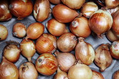 The onions very fresh at street market Stock Images