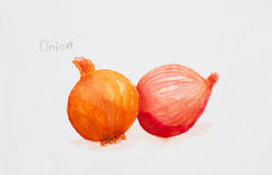 Onions  watercolor painted Stock Photo