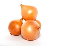 onions white Στοκ Εικόνα