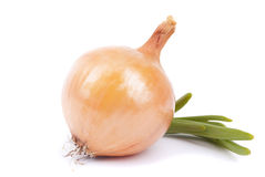 Onions. Royalty Free Stock Images