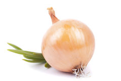 Onions. Stock Photos