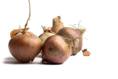 Onions on a white background.  Royalty Free Stock Images