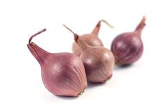 Onions  on white background.  Stock Images
