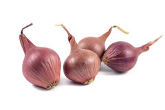 Onions  on white background.  Stock Photo