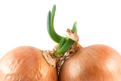 Onions on white Royalty Free Stock Image