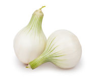 Onions white two Stock Photos