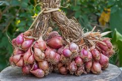 Onions on wooden Royalty Free Stock Photos