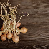 Onions on a wooden table Royalty Free Stock Images
