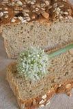oniony φέτα κρεμμυδιών λουλο&ups Στοκ Εικόνες